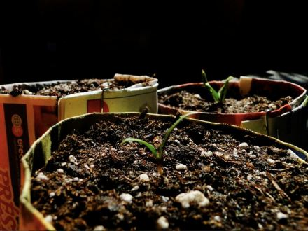 Este podcast muestra una forma práctica de hacer semilleros ecológicos