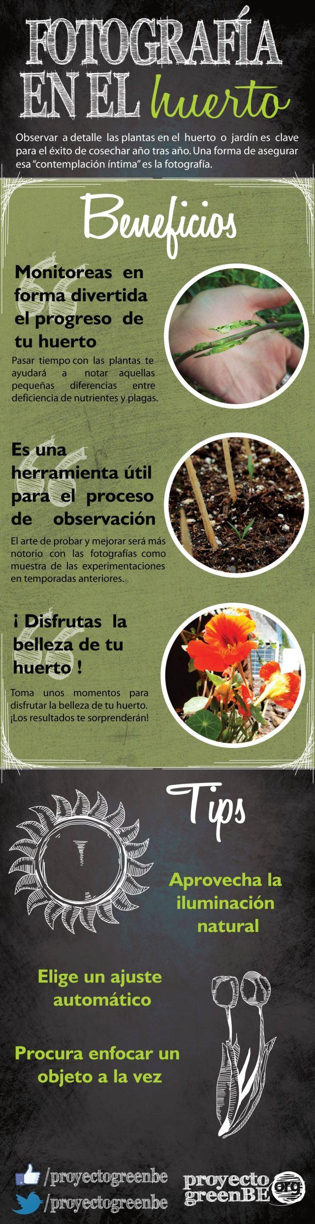 Infográfico Fotografía en el Huerto